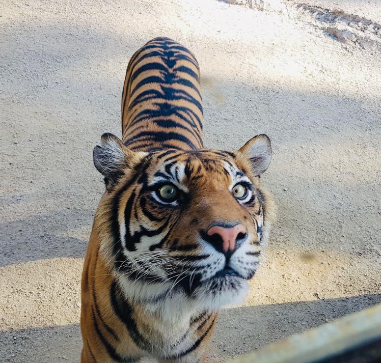 taronga_zoo_sydney