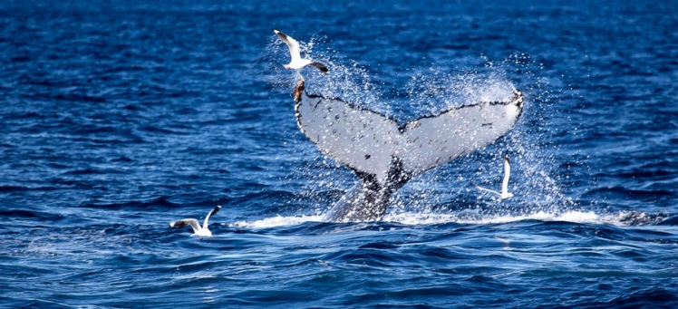 whale_watching_sydney